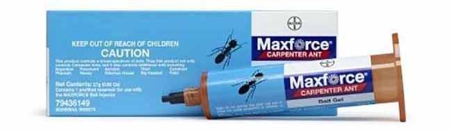 Carpenter Ant Gel Bait: photo