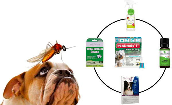 Best Mosquito Repellents For Dogs: photo