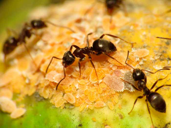 Superb Know Your Enemy: Black Ants