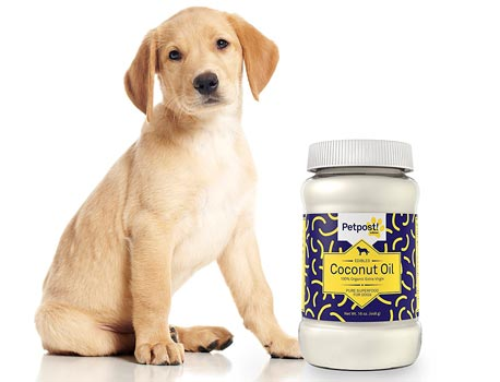 Coconut Oil fdor your pets: photo