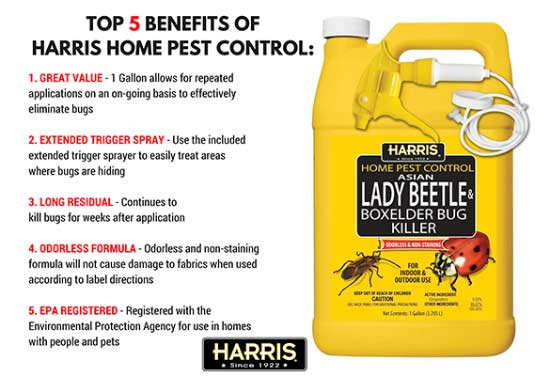 How To Get Rid Of Boxelder Bugs TOP8 Killers