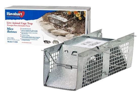 Live-catch vole trap: photo