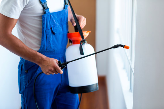How Professional Exterminators Work: Everything You Need to Know