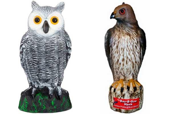 Пугала ястреба и совы от птиц: фото