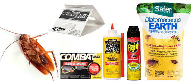 Best Roach Products: photo