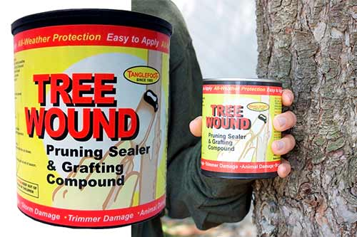 Tanglefoot Tree Wound Pruning Sealer & Grafting Compound: photo