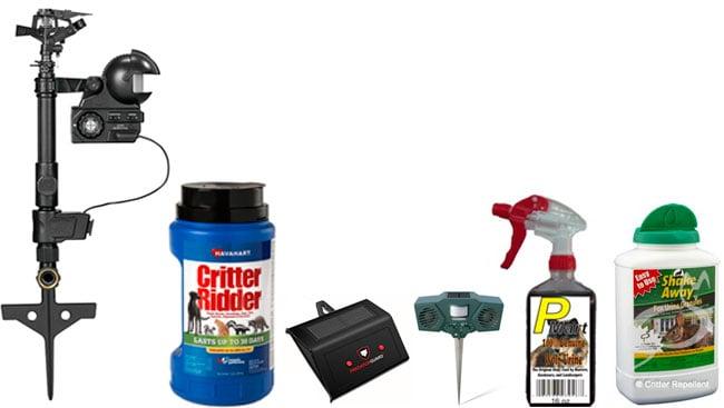 Best Possum Repellents: photo