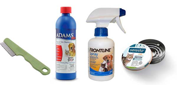 Various ways to get rid of fleas on cats: photo