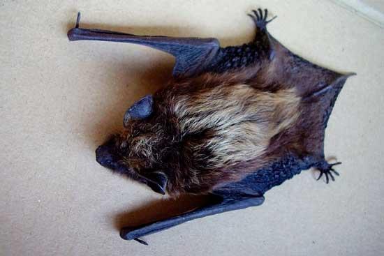 избавляемся от летучих мышей: фото