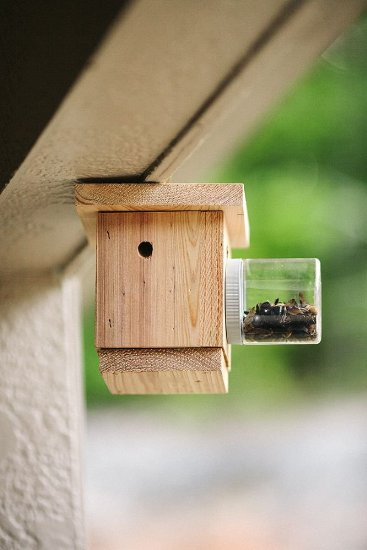 Bees N Things Carpenter Bee Trap