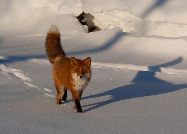 fox route: photo