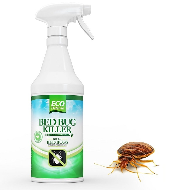 Top 5 bed bug sprays blood sucking insects killer which for Como eliminar chinches de cama