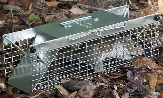 How To Get Rid Of Squirrels Best Traps And Repellents Review