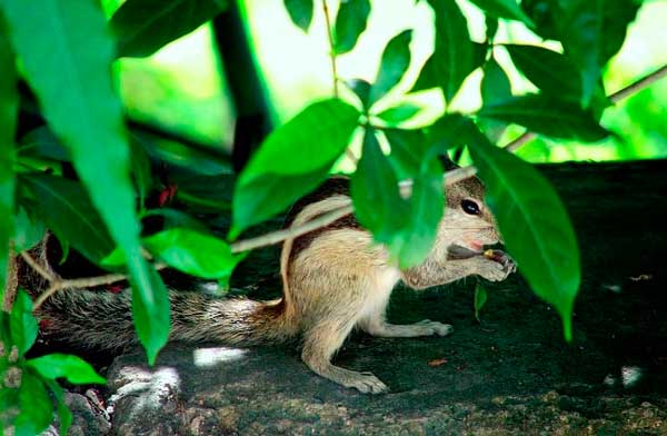 How to get rid of chipmunks the best chipmunk traps and