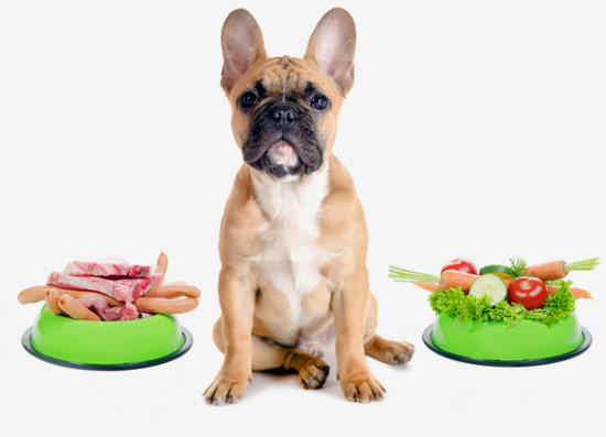 dogs diet: photo