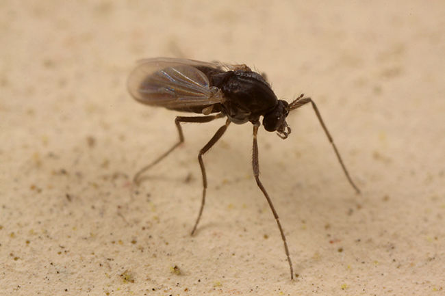 How to Get Rid of Sand Flies