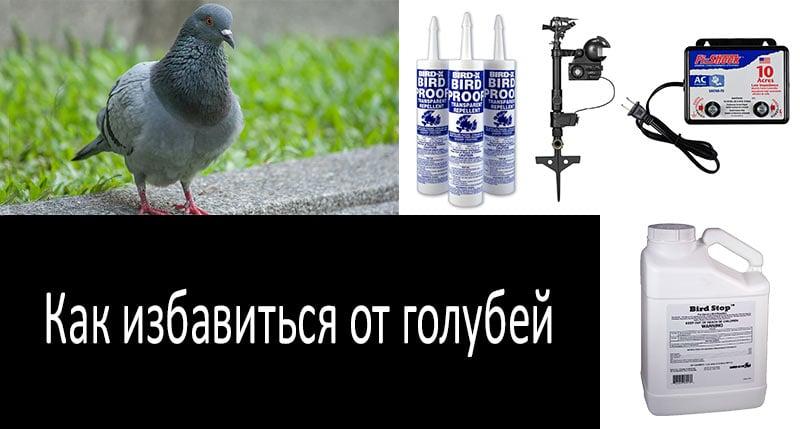 Как избавиться от голубей: смотреть больше