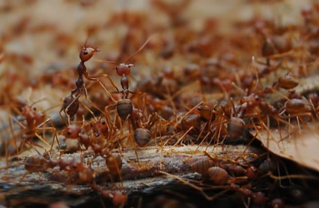 Prevención de nuevas colonias de hormigas