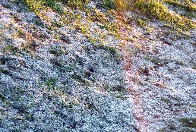 lawn fungus control: photo