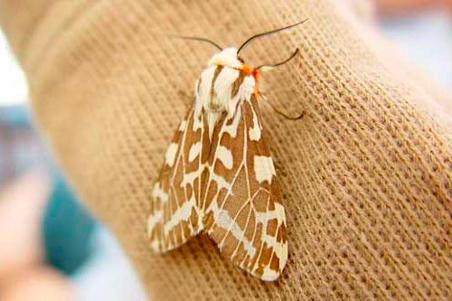 do moths eat clothes?: photo
