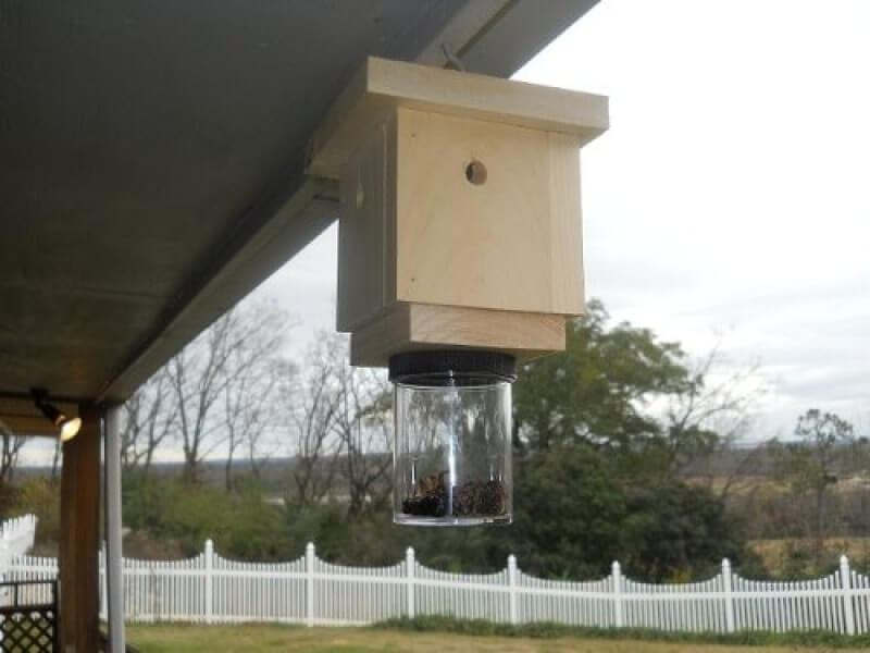 How To Get Rid Of Carpenter Bees Top 3 Best Bee Traps