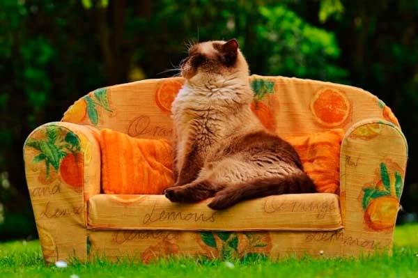 puce traitement pour les chats 8 haut meilleurs produits pour se d barrasser des puces sur les. Black Bedroom Furniture Sets. Home Design Ideas