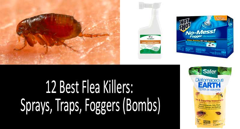 how to kill foggers: photo