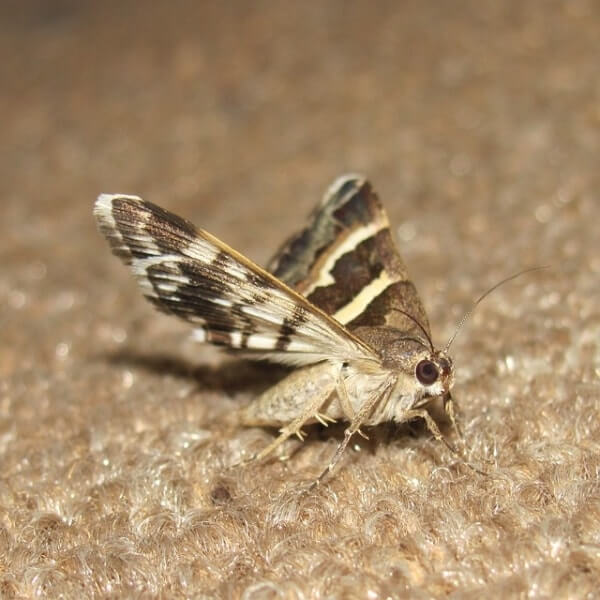 How To Get Rid Of Moths A Review Of The Best Traps