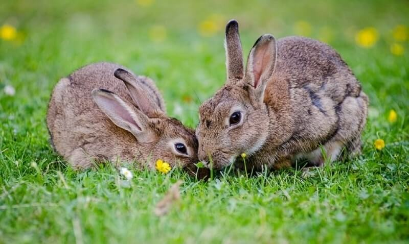 How to get rid of rabbits both in winter and in summer 7 - How to keep rabbits out of a garden ...