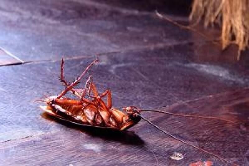 Cómo deshacerse de las cucarachas: ¡las mejores maneras de hacerlo solo/a sin un exterminador!