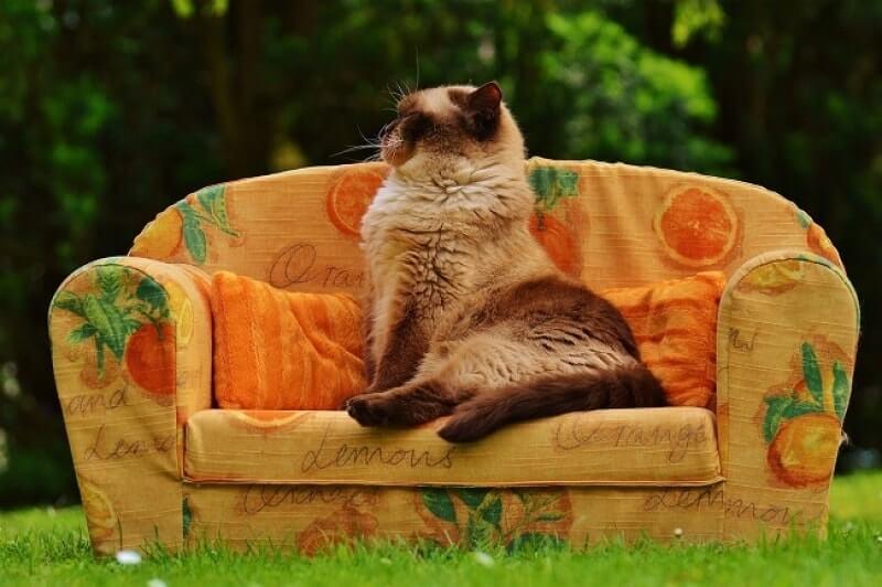 Cómo deshacerse de las pulgas en los gatos rápidamente: mejor medicina de pulgas