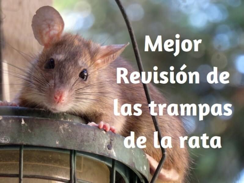 Seleccionar las mejores Rat Trap: Sonar, En Vivo Atrapa & trampas de rata electrónicas