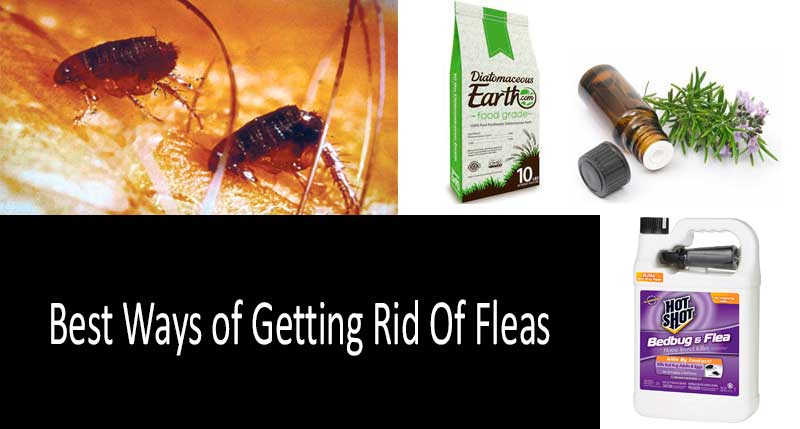 the best flea control products: photo