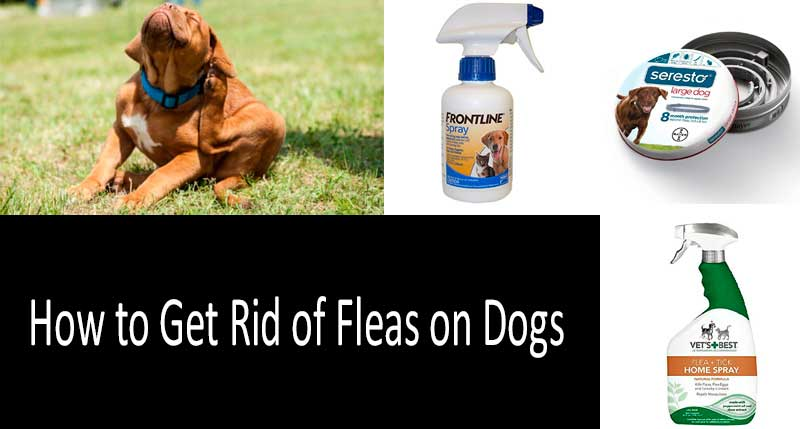 the best dog flea treatment: photo