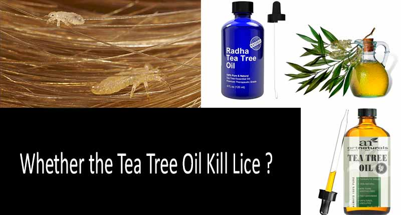 Tea Tree Oil for Lice: Does it Repel Lice? The Scientists' Opinions