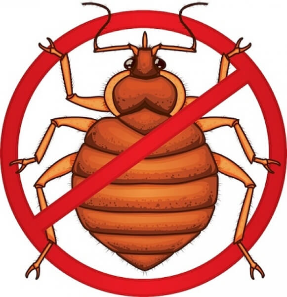 The Complete Guide to How to Kill Bed Bugs: Scientifically Approved Bed Bug Traps, Mattress Protectors, Sprays and Dusts