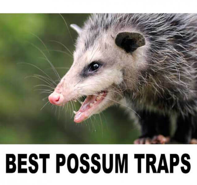 Top 3 possum traps to surely catch a possum - How to get rid of possums in the garden ...