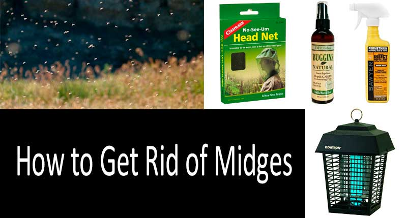10 Ways to Get Rid of Midges: 8 Best Repellents & Insect