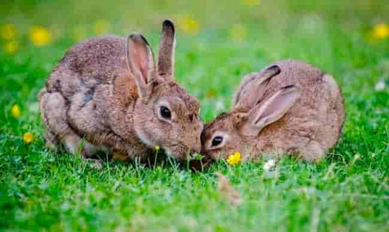 how do you keep rabbits out of your garden how do i get rid of rabbits in my backyard 28 images