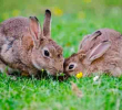 Top 7 best ready-to-use rabbit repellents