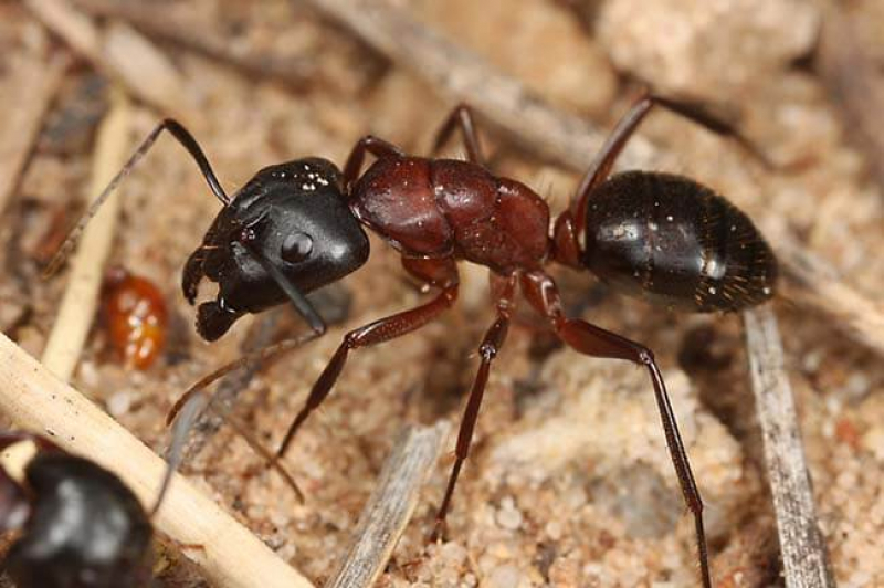 17 Best Fire Ant Killers: The Comparative Review of Gel Baits, Dusts and Insecticides