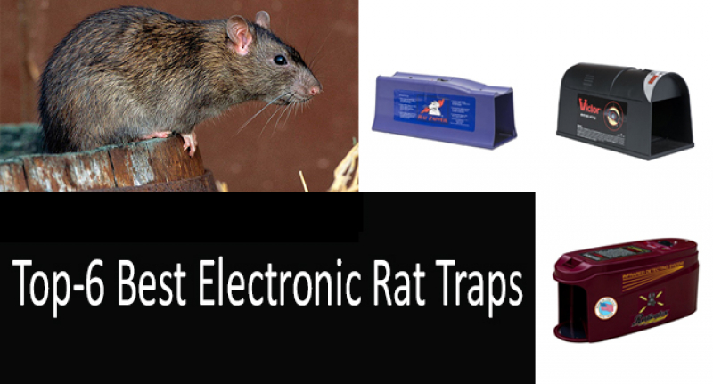 Selecting the Best Rat Trap: Snap, Live Catch & Electronic Rat Traps