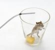 Armadilha Caseira para Ratos e Camundongos - A Maneira Fácil de se Livrar dos Roedores