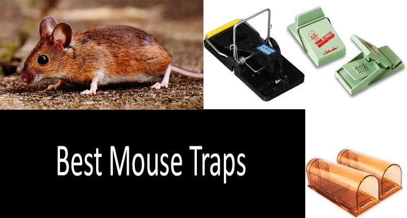 best mouse traps: view more