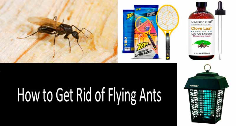 how to get rid of flying ants 5 best ant control products in 2019. Black Bedroom Furniture Sets. Home Design Ideas