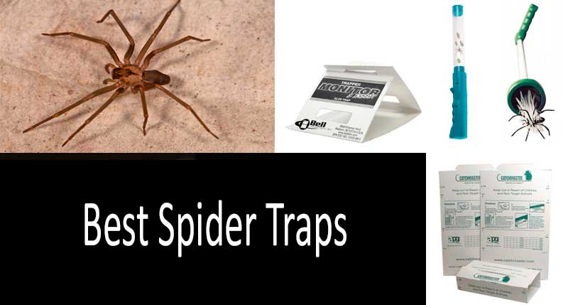 A Comparative Review of 4 Best Spider Traps