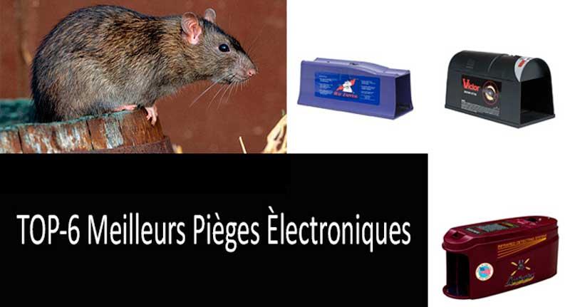 Choisir le meilleur piège à rats: snap, catch en direct et trappes de rats électroniques
