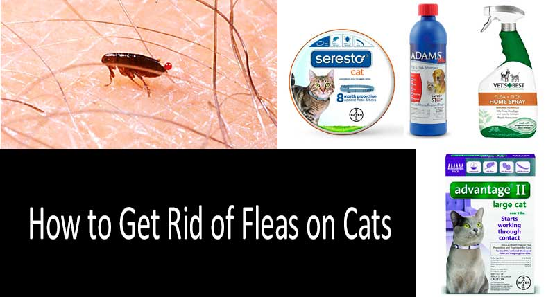 how to get rid of fleas on a cat: photo