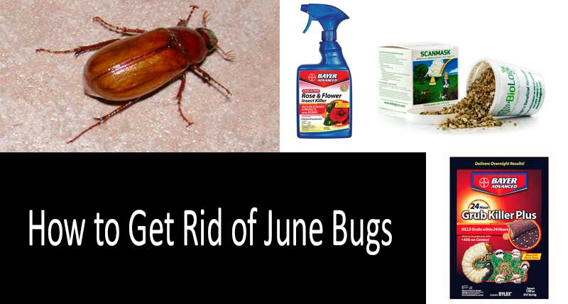 How to get rid of June bugs: photo