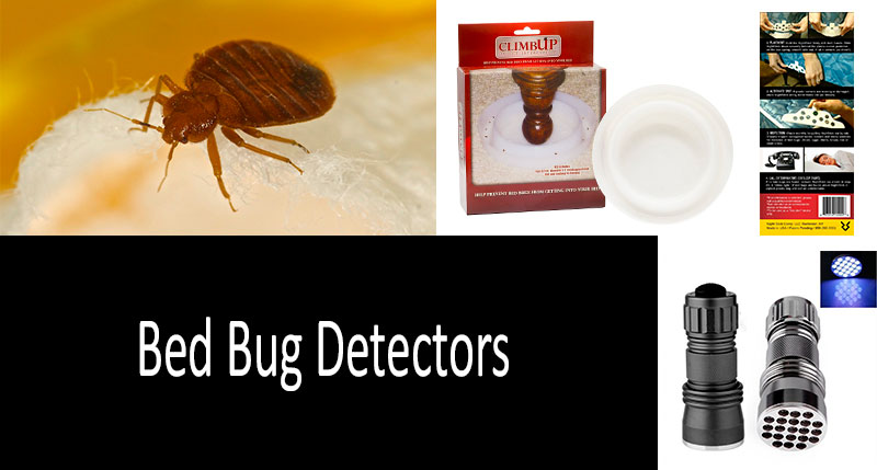how to find bed bugs: photo